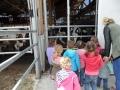 Bei den Kühen