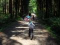 Im-schöne-grüäne-Wald